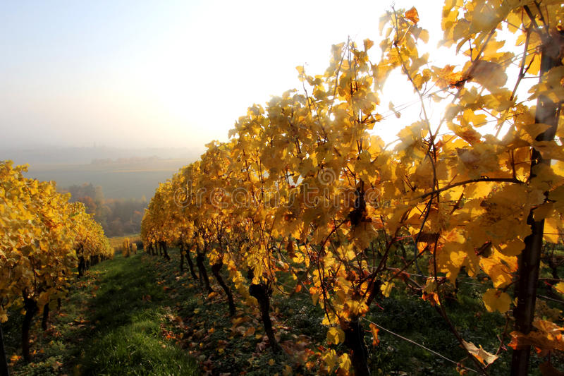 Wina rolnictwo w Hesse obraz stock