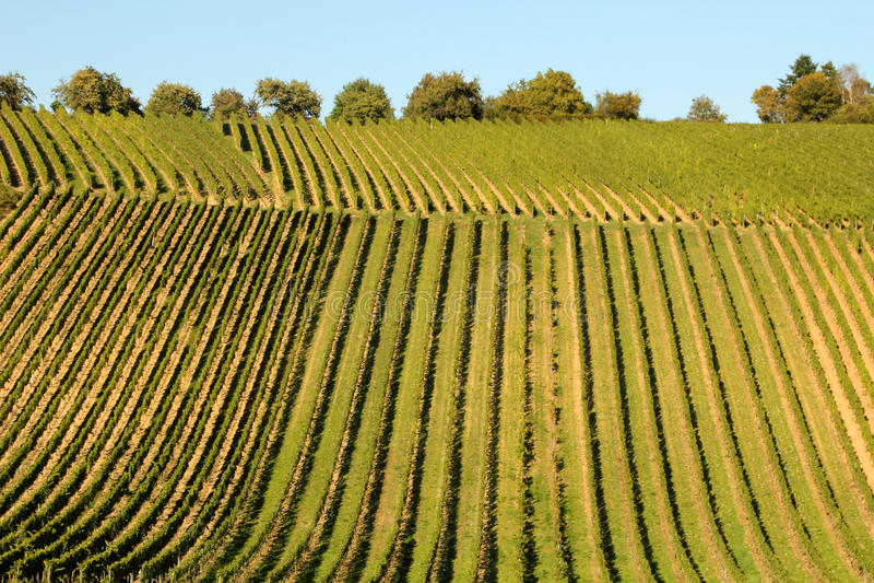 Wina rolnictwo w Hesse obrazy royalty free