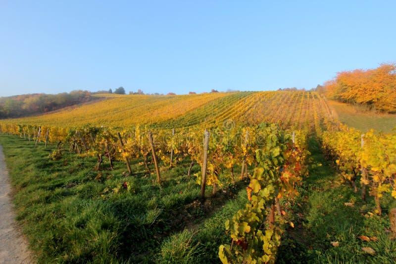 Wina rolnictwo w Hesse zdjęcie stock