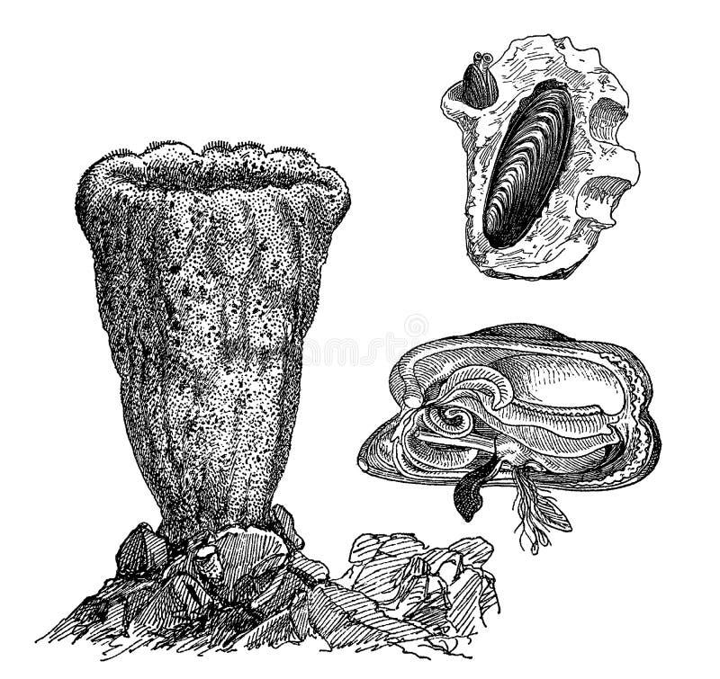 Wincenty ze ślimaków ilustracji