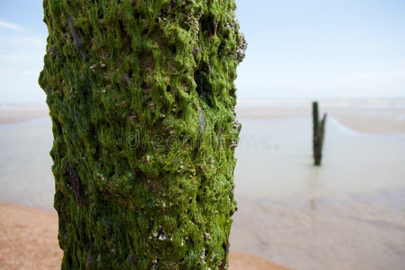 Winchelsea Angleterre de côte de temps de plage photographie stock