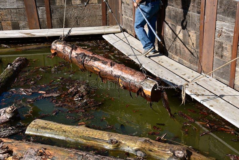 Winching velho do tempo dos logs fora da água na maneira a uma serração fotos de stock royalty free