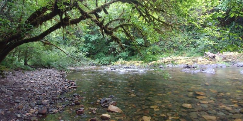 Winchuck flod Oregon royaltyfria bilder