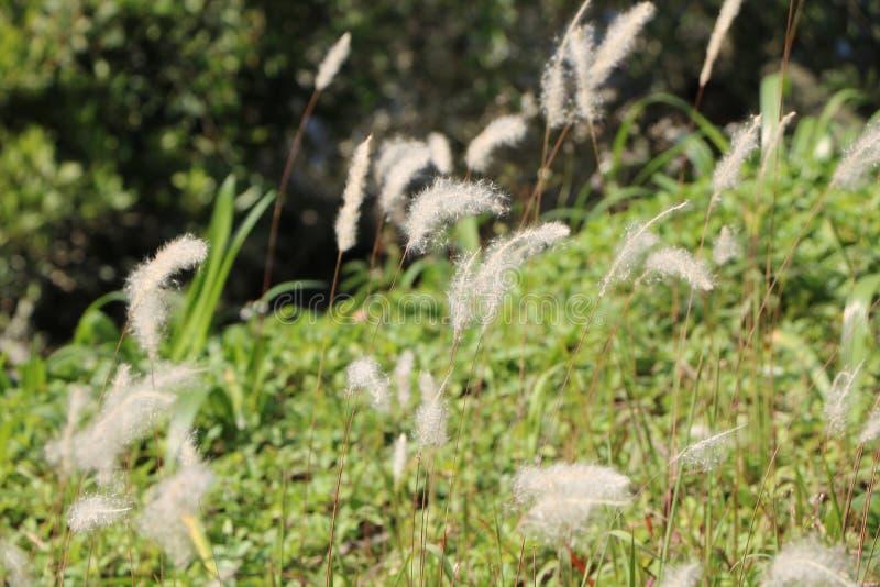 wind royaltyfria foton