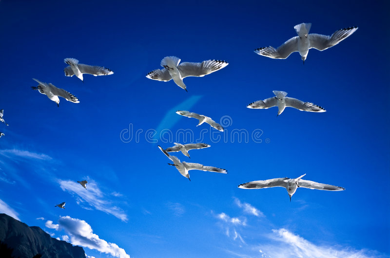 Wind Beneath Wings Stock Photo