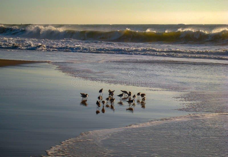 Wind-blown Surf on a Cavaleirous Dawn, RJ, Brazil. Birds feeding in a wind-blown Surf on a Cavaleirous Dawn, RJ, Brazil stock photography