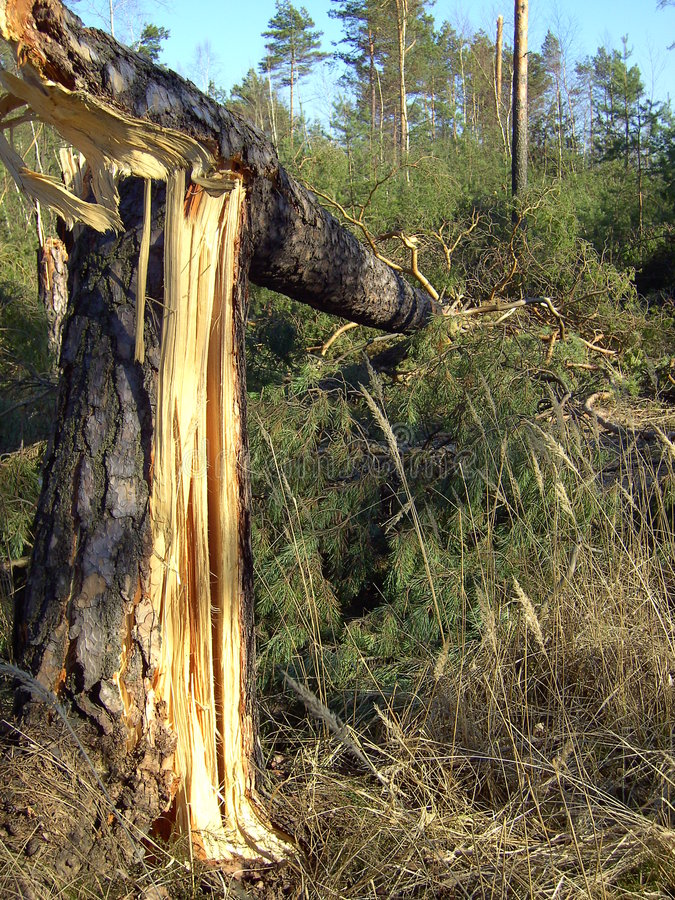 Wind damage 04 stock photo