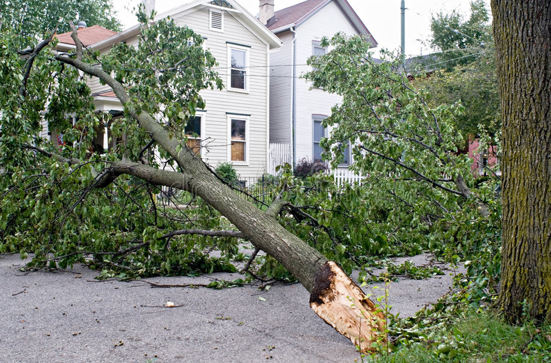 Wind Damage. To a tree after a storm in the Midwest. Tree is caught on electrical lines royalty free stock photos