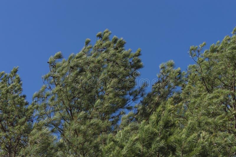 Wind in de bomen royalty-vrije stock fotografie