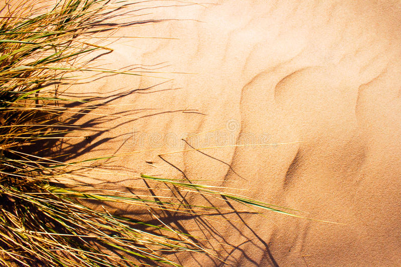 Wind durchgebranntes Gras auf Sand Dun stockfotografie
