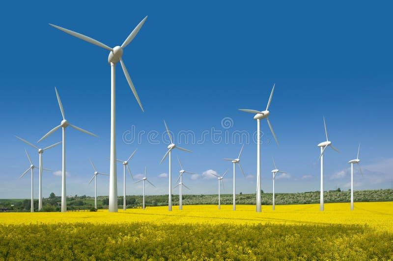 wind för fältrapeseedturbiner fotografering för bildbyråer