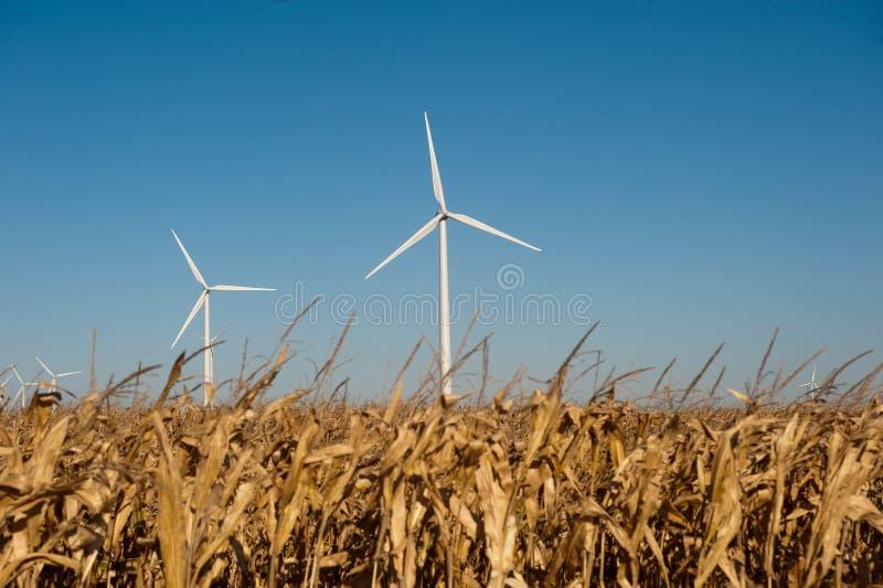 wind för havrefältturbin royaltyfri foto