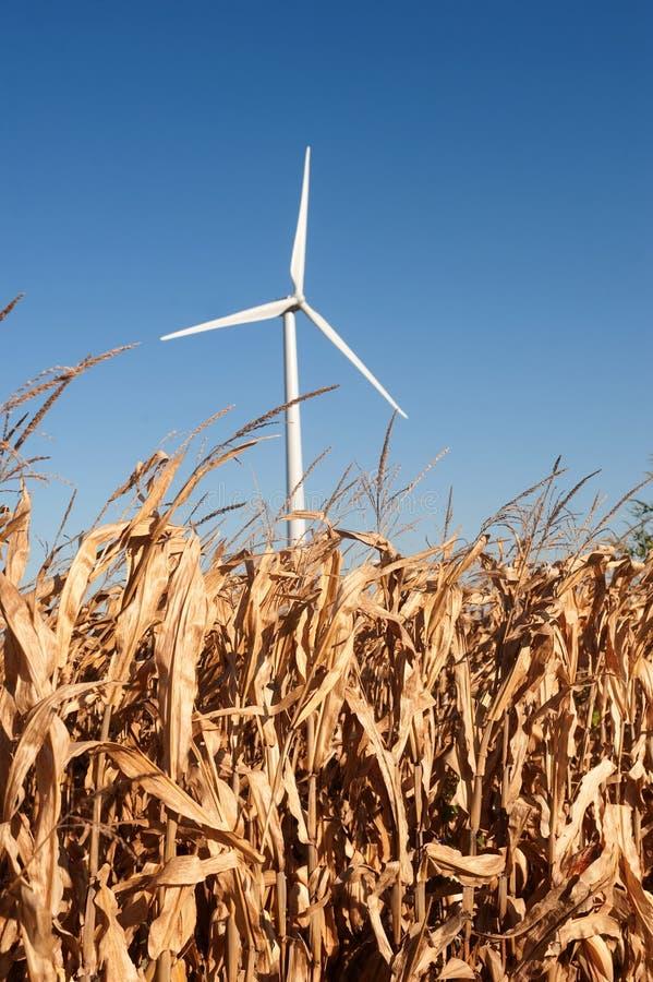 wind för havrefältturbin arkivfoto