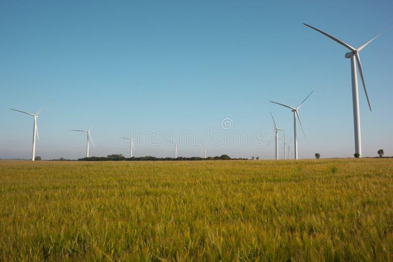 wind för turbiner för kornfälthorisont royaltyfri foto