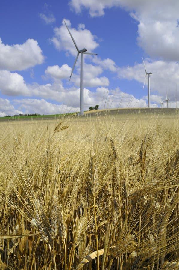 Wind Farm And Barley Royalty Free Stock Photos