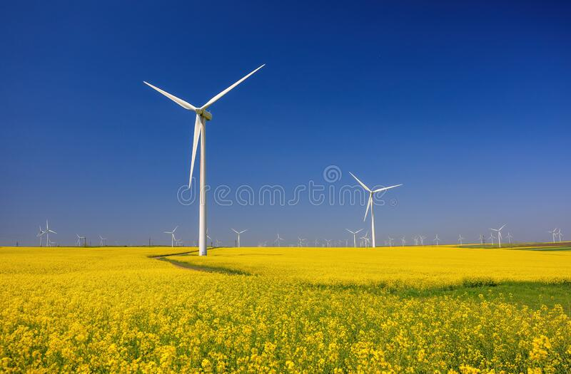 Wind farm and beautiful rapeseed flower in bloom with a clear blue sky. Lots of wind turbines in a field of blooming rapeseed. royalty free stock photos