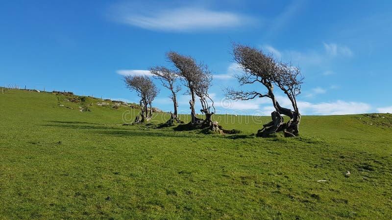Wind geblazen bomen royalty-vrije stock foto's