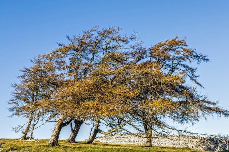 Wind geblazen bomen op gebied royalty-vrije stock afbeelding