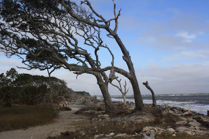 Wind geblazen boom op het strand bij Jeklly-Eiland royalty-vrije stock afbeelding
