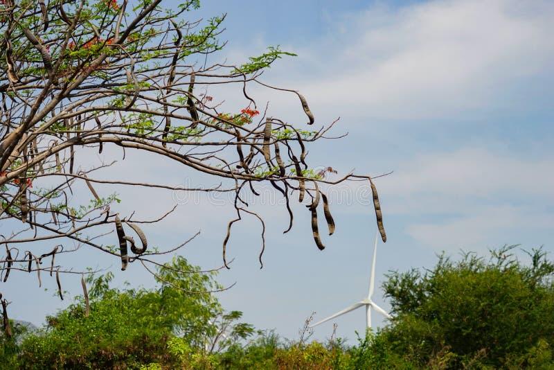 Wind gedreven elektrische centrales royalty-vrije stock foto's