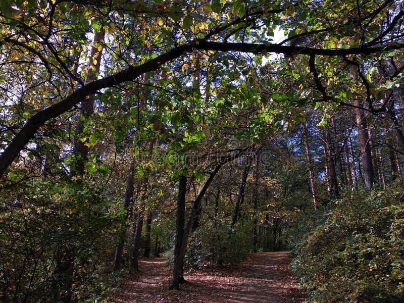 Wind im Herbstwald stockfotos