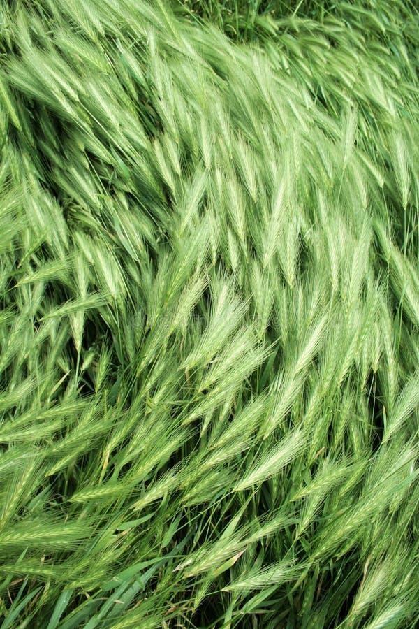 Wind op groen gras royalty-vrije stock foto's