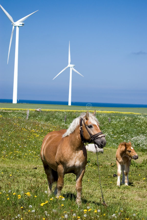 Download Wind power horses. stock photo. Image of grazing, white - 2432634
