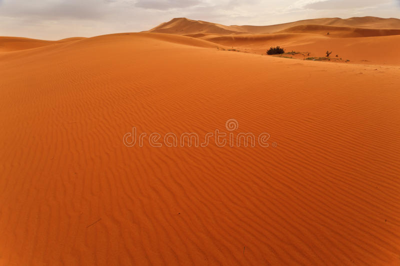 Download Wind Rippled Sand Dune And Oasis Sahara Morocco Stock Photo - Image: 22616188