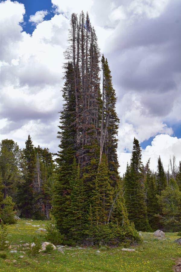 Wind River område, Rocky Mountains, Wyoming, sikter från fotvandring som fotvandrar slingan till den Titcomb handfatet från Elkha arkivbild