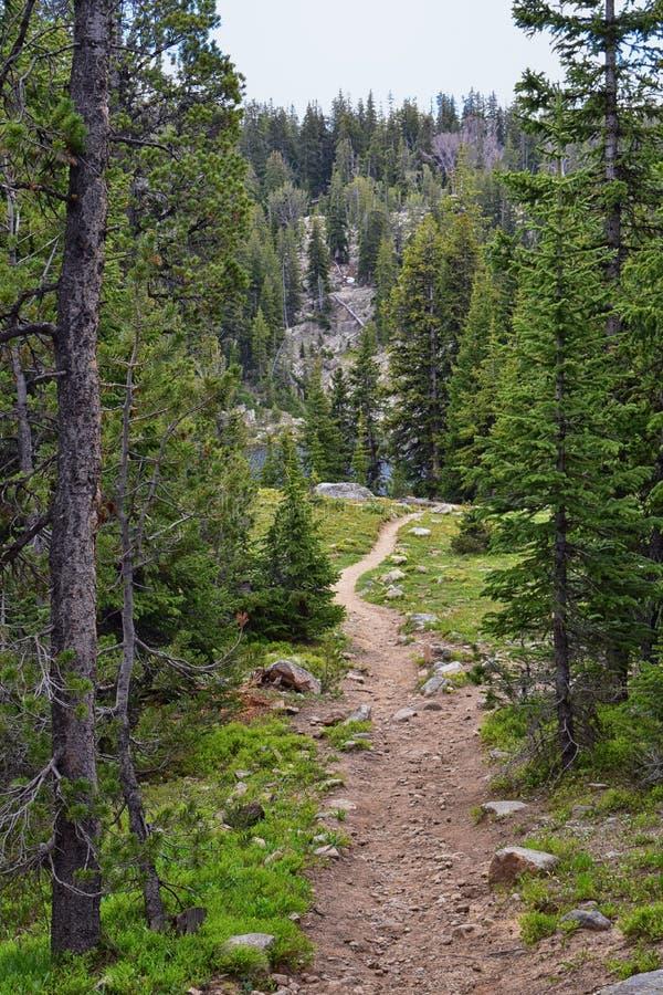 Wind River område, Rocky Mountains, Wyoming, sikter från fotvandring som fotvandrar slingan till den Titcomb handfatet från Elkha royaltyfri fotografi