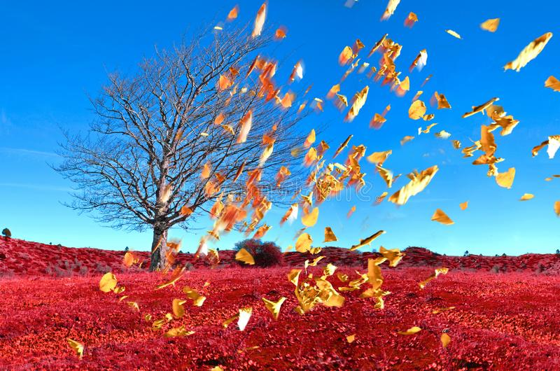 Wind tee falling leaves on air , autumn weather background royalty free stock photos
