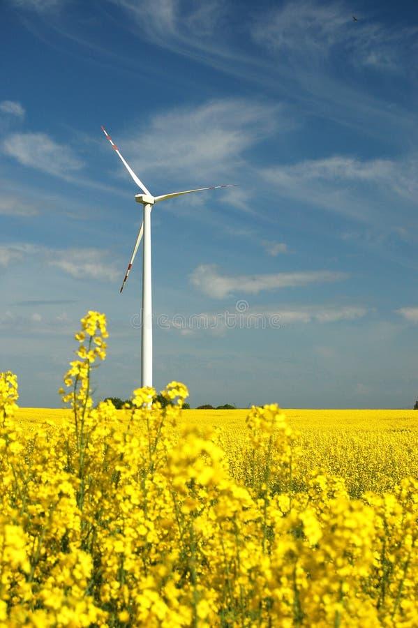 Wind turbine on field of oilseed stock images