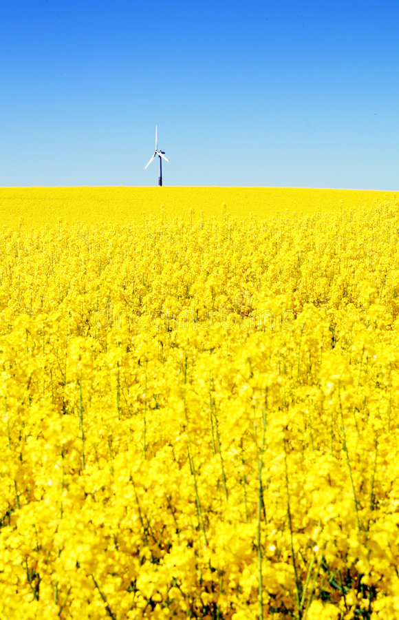 Free Wind Turbine Rapeseed Field Royalty Free Stock Image - 5147096