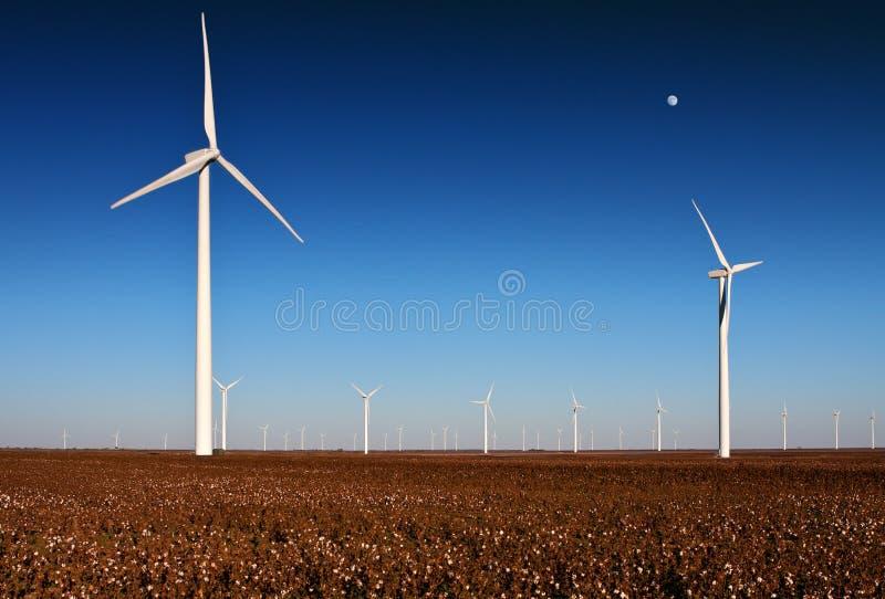 Wind turbines in a Cotton Field