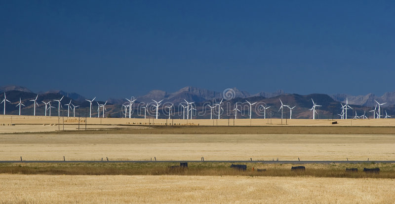 Wind Turbines in the Foothills. Poised to capture the perpetual wind of southern Alberta, white wind turbines stand in the golden grasslands of the foothills royalty free stock photos