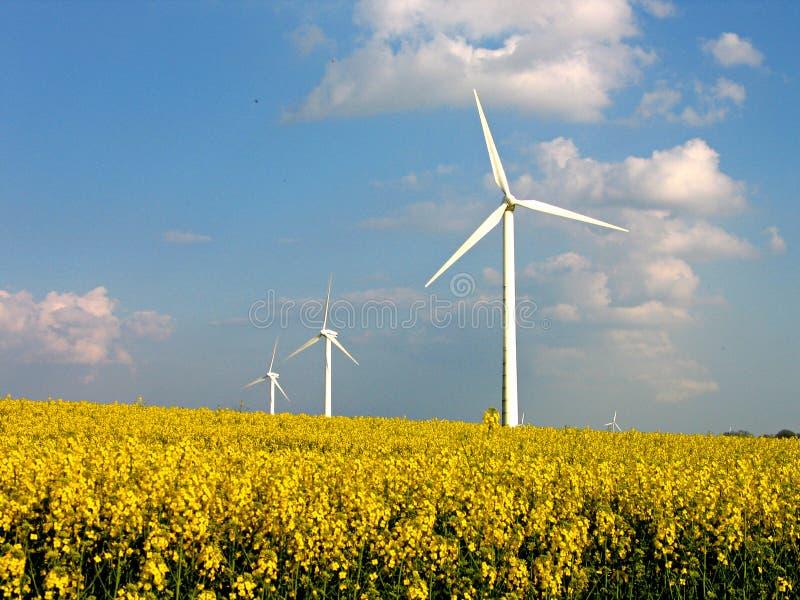 Wind turbines in rapes field - Alternative energy. Environmental friendly alternative energy by wind turbines in rapes field royalty free stock photos