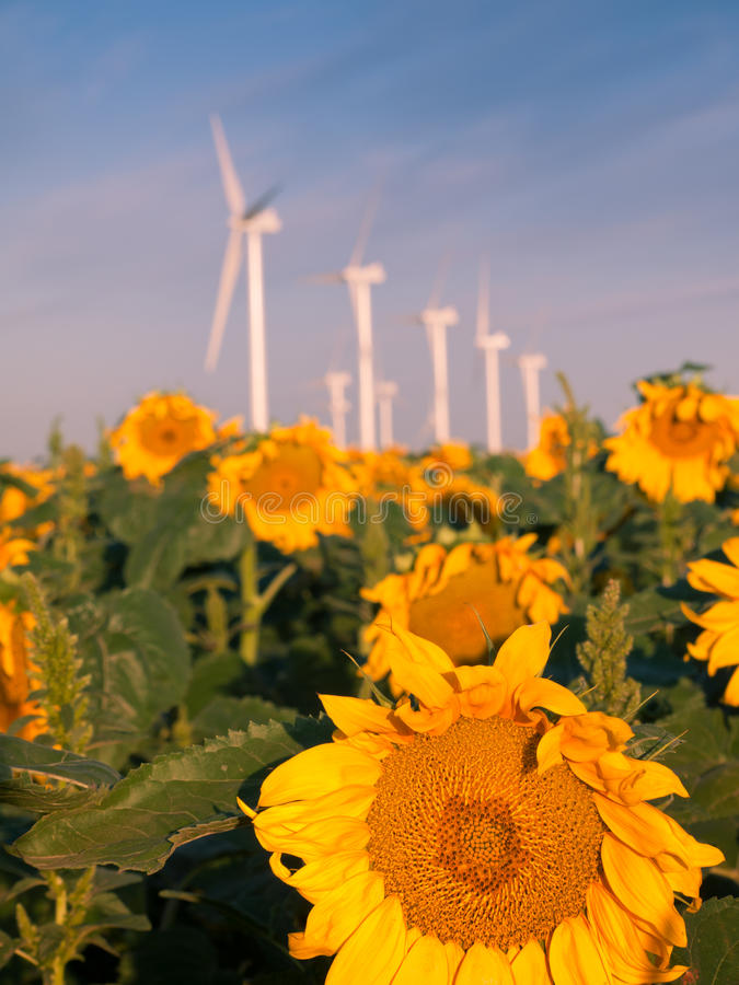 Wind turbines and sunflowers stock photography