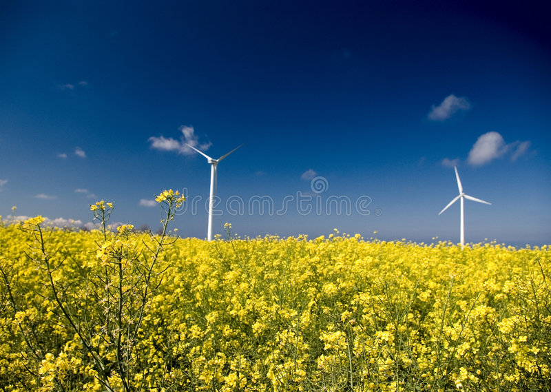 Wind turbines, yellow field. royalty free stock image