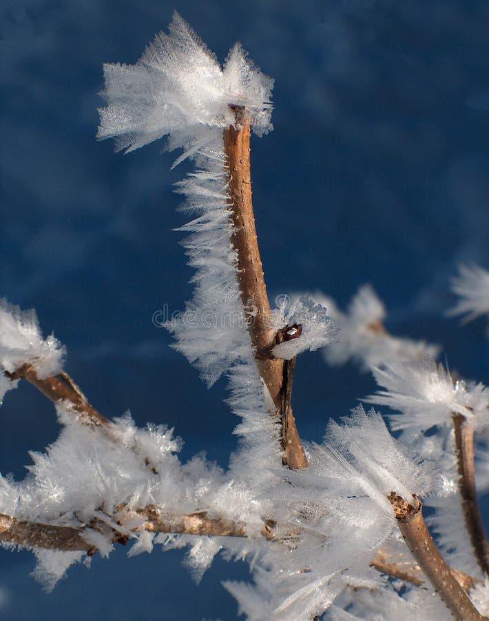 Wind van de winter stock foto