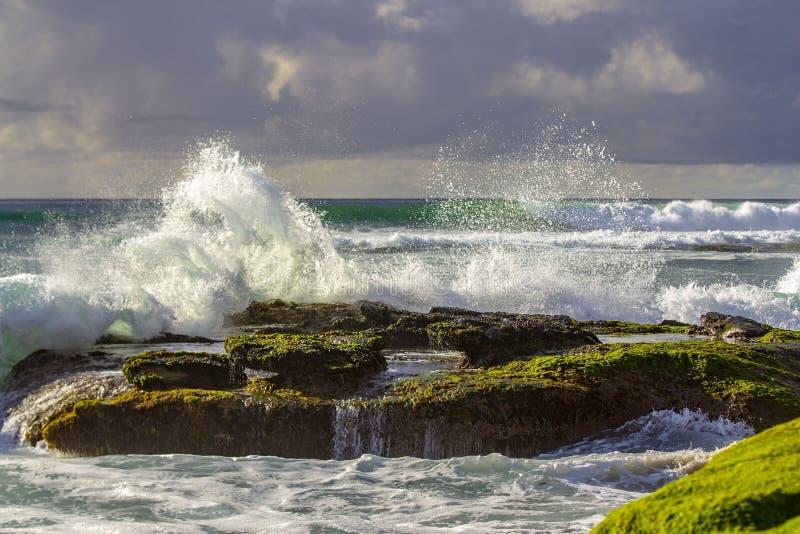 Windansea strand arkivbild