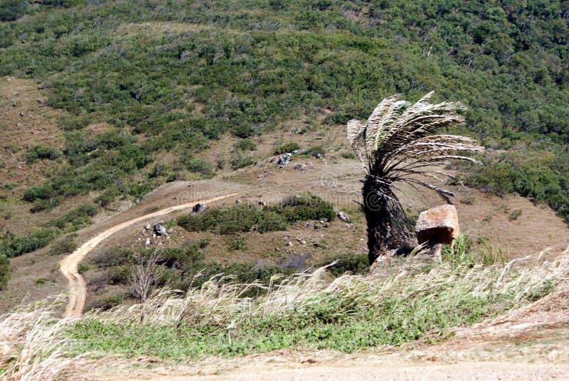 Windblown Boom op de Berg royalty-vrije stock fotografie