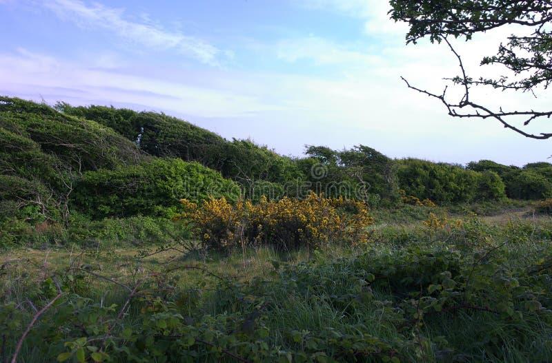 Windblown Eastbourne - Beachy huvud - - jag - arkivbilder