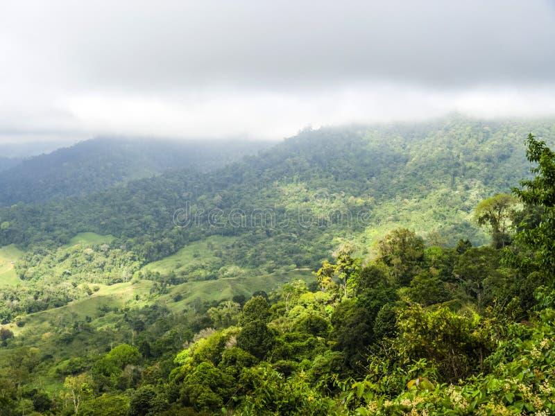 Windblown treetops in het regenwoud van Rio Celeste Valley i stock afbeeldingen