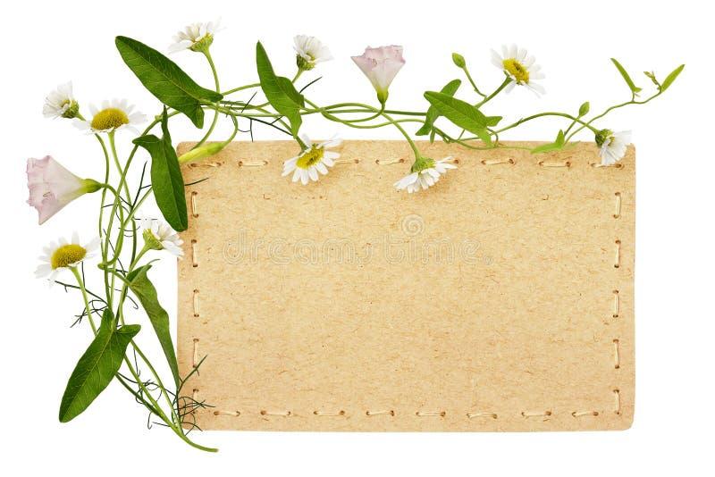 Winde en madeliefjebloemen met kaart stock afbeelding