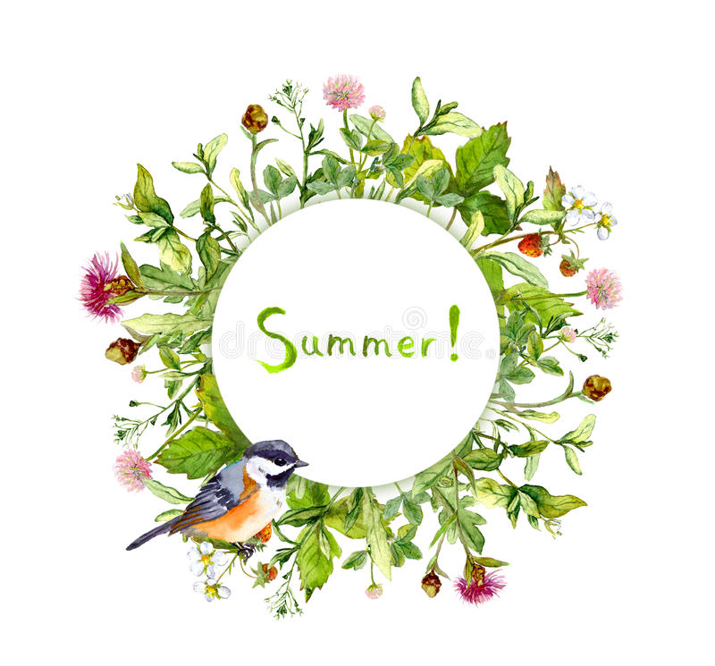 Winden Sie Grenzrahmen - Sommerkräuter, Wiesenblumen, netter Vogel watercolor stockfotos