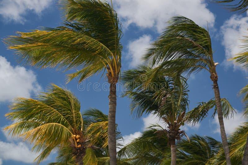 Winden van Aruba royalty-vrije stock afbeelding