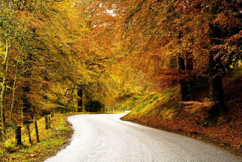 Windend Road Coutry door een Bos van de Herfst stock afbeelding