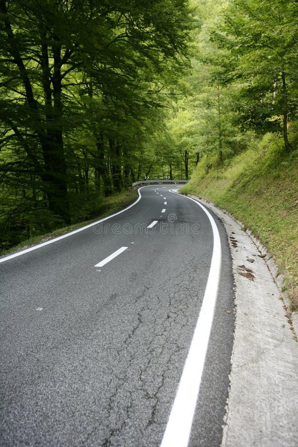 Windende de krommeweg van het asfalt in een beukbos royalty-vrije stock fotografie