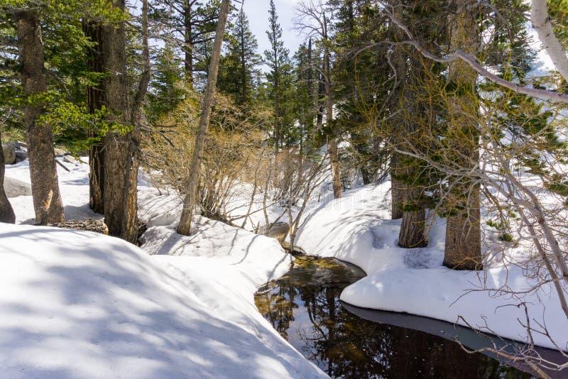 Windende kreek, pijnboombomen en sneeuw in Onderstel San Jacinto State Park, San Bernardino National Forest, Californië stock fotografie