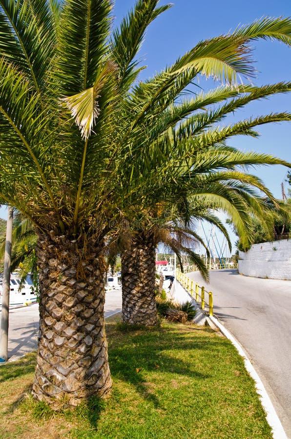 Windende kustweg en palmen op Grieks eiland bij ochtend royalty-vrije stock afbeeldingen